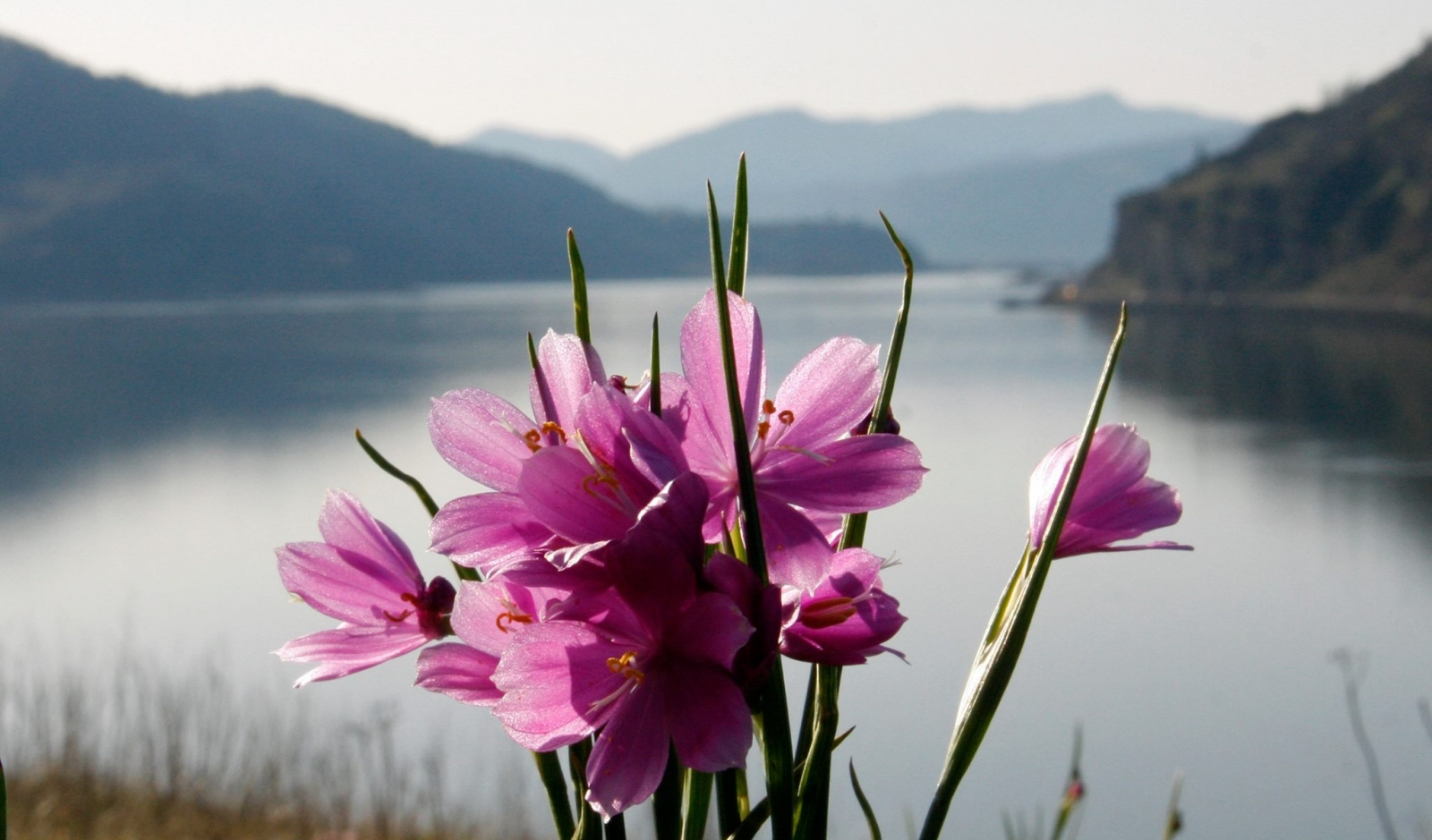 Flowers along the Columbia River